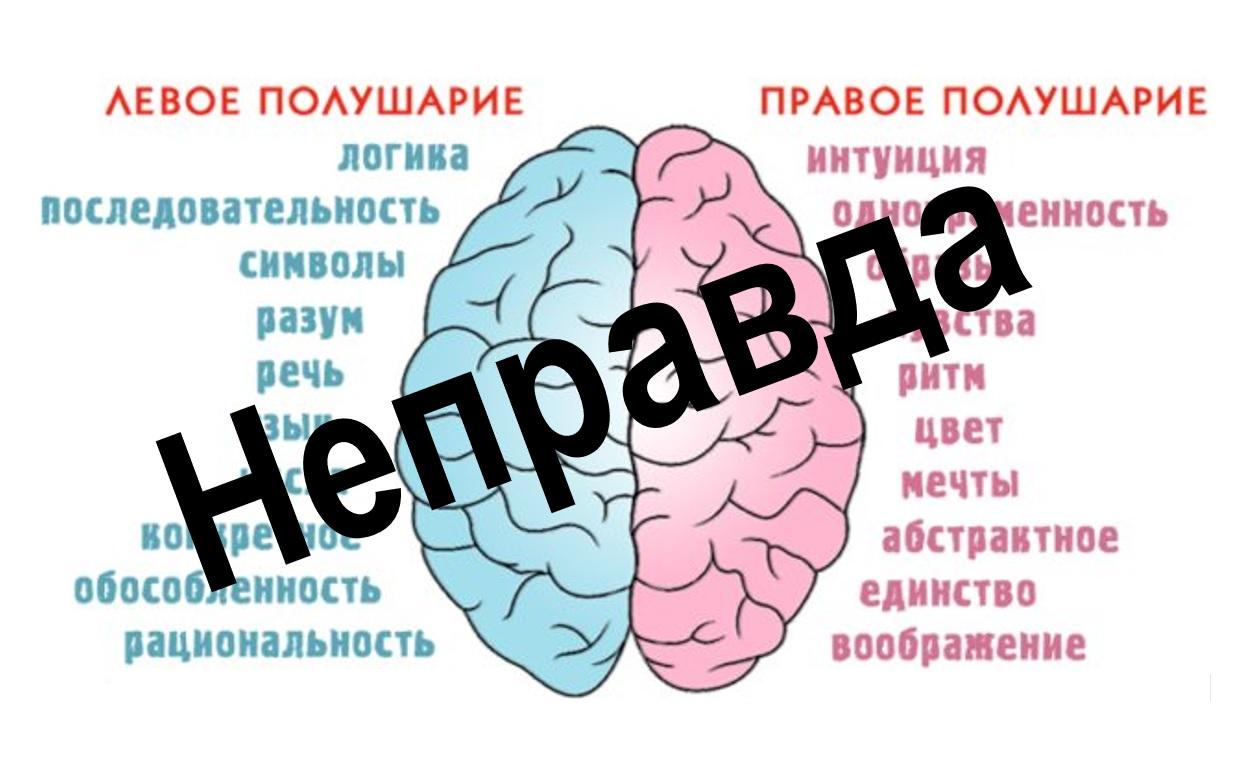Правое и левое полушарие мозга НЕ отвечают за эмоции и логику. Что помогает развивать мозг?